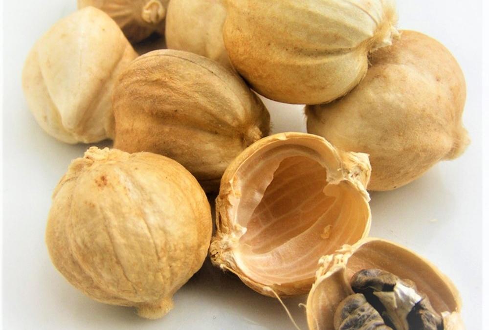 Jual Kapulaga Grosir – White Cardamom Supplier – PT. Karya Baru Indonesia